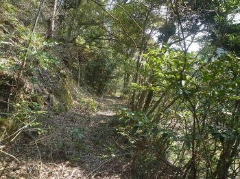 P1370906山道.JPG
