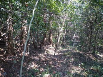 P1370909左植林境の踏み跡.JPG
