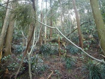 P1370952植林段状地.JPG