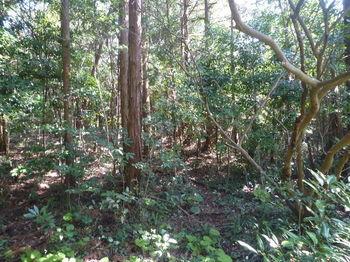 P1370972植林出合い.JPG
