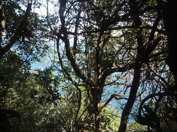 P1370991樹間の海.JPG