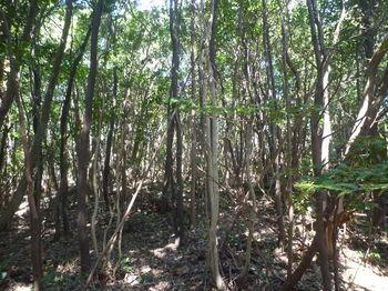 P1370994雑木林.JPG