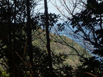 P1370999ピーク近くから灯台を望む.JPG