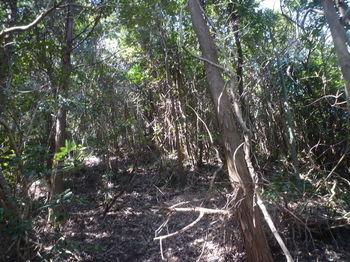 P1380005植林境・上り.JPG