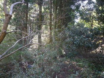 P1380034ササ・植林の谷.JPG