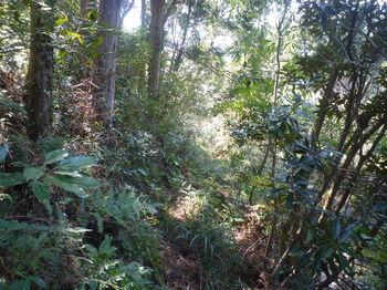 P1380043植林沿い・踏み跡.JPG