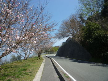P1380062通学路の桜並木.JPG