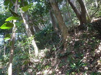 P1380096雑木斜面を上がる.JPG