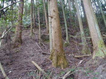 P1380149植林谷を詰める.JPG