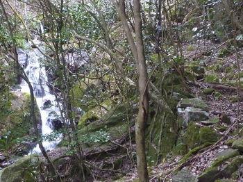 P1380179滝.JPG