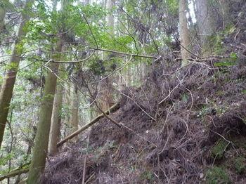 P1380205植林斜面を高巻き.JPG
