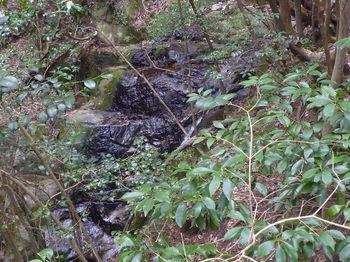 P1380273二連の滝(下方).JPG