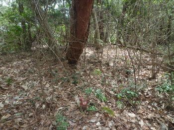 P1380441コン杭「団43」.JPG