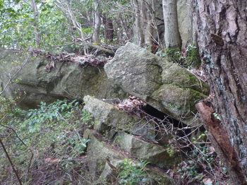P1380701岩.JPG
