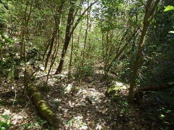 P1380812灌木の踏み跡.JPG