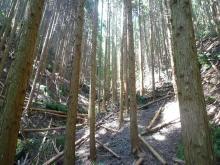 山へgomen … 山口県の山歩き記録