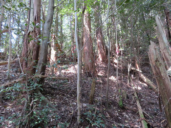 082植林斜面.JPG