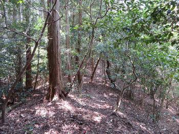 097植林境・下り.JPG