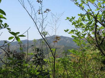 114樹間に東鳳翩山を望む.JPG