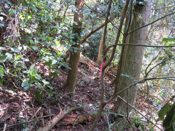 143植林斜面を巻く.JPG