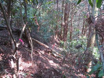 153植林斜面を右に巻く.JPG