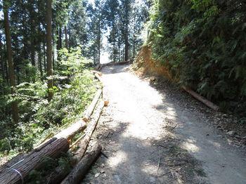 IMG_0457林道・路肩の伐採木.JPG