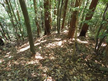 IMG_0773植林出合い.JPG