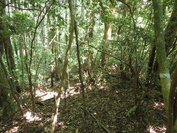 IMG_0780植林出合い.JPG