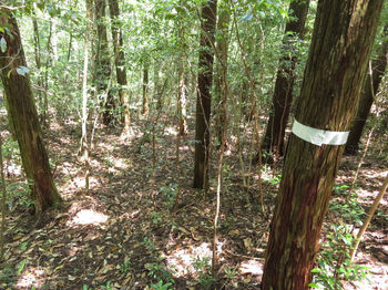 IMG_0781植林谷の踏み跡.JPG