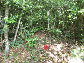IMG_0806山頂・植林頂部側・コン杭「水造6」.JPG
