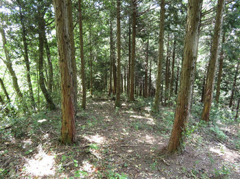 IMG_0894南尾根の植林.JPG