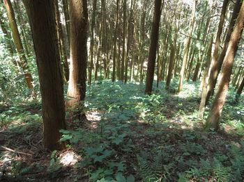 IMG_0928植林出合い.JPG