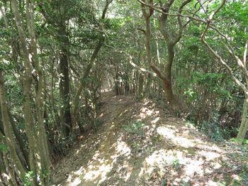 IMG_1244登山道.JPG