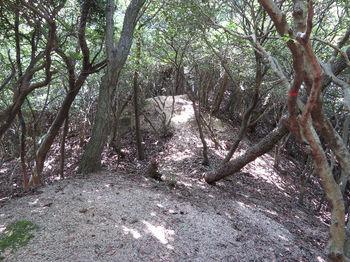 IMG_1310登山道.JPG