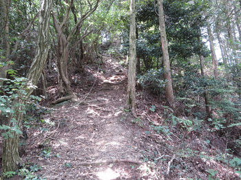 IMG_1330植林境・急坂・ロープ.JPG