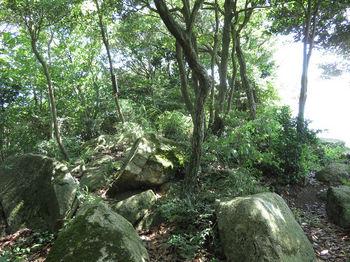 IMG_1415権現山山頂.JPG