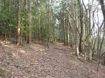 IMG_4822植林沿い.JPG