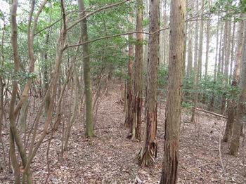 IMG_4857植林沿い.JPG