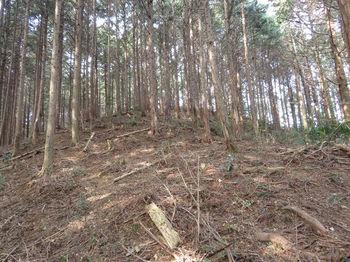 IMG_4872植林尾根・上り.JPG