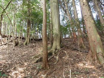 IMG_4887植林境尾根・上り.JPG