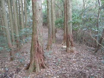 IMG_4889植林境・下り.JPG