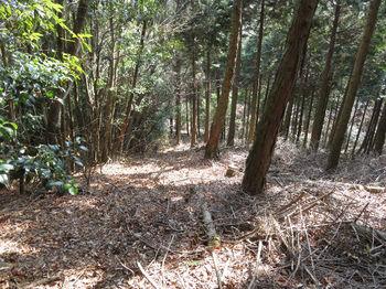 IMG_4910植林境・枝打ち.JPG