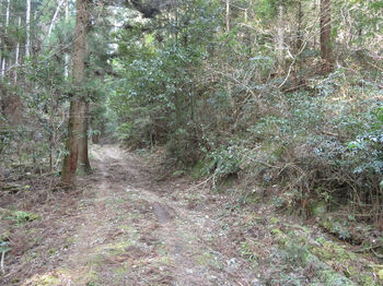 IMG_4950林道・下降地点(逆方向).JPG