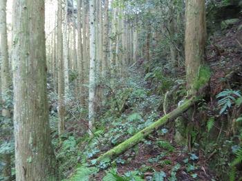 IMG_8209山道.JPG