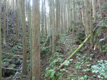 IMG_8211山道.JPG