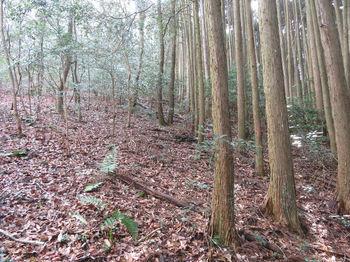 IMG_8215植林沿い.JPG
