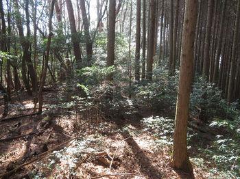 IMG_8238植林沿い.JPG