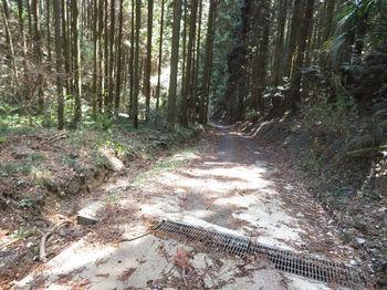 IMG_8285舗装林道.JPG