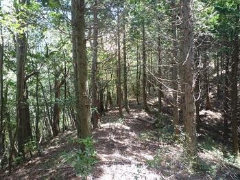 P1050282植林境の尾根道.JPG