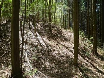 P1050299明瞭な山道と出会う.JPG